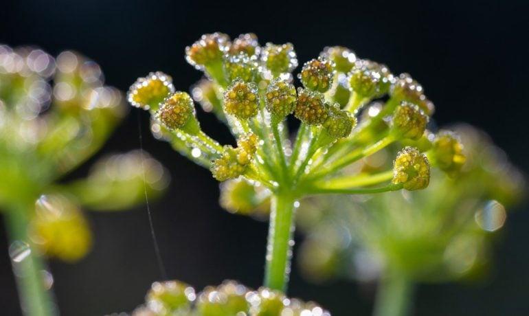 Adaptogeny – niezwykłe rośliny, które wzmacniają organizm
