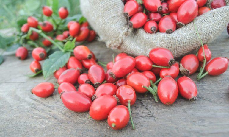 Ekstrakt z owoców dzikiej róży (Rosacanina) [70%witaminy C]