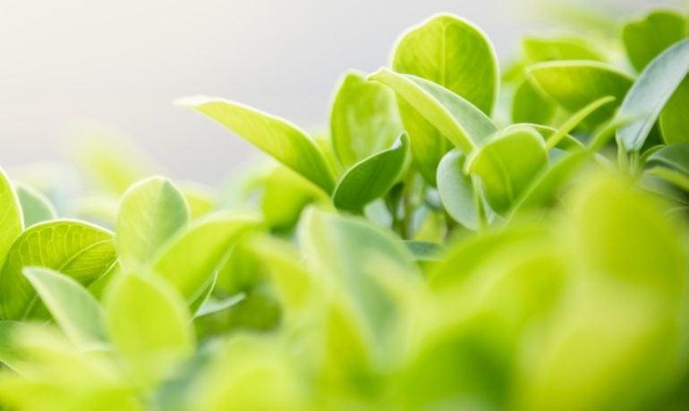Glikozydy roślinne i ich wpływ na organizm