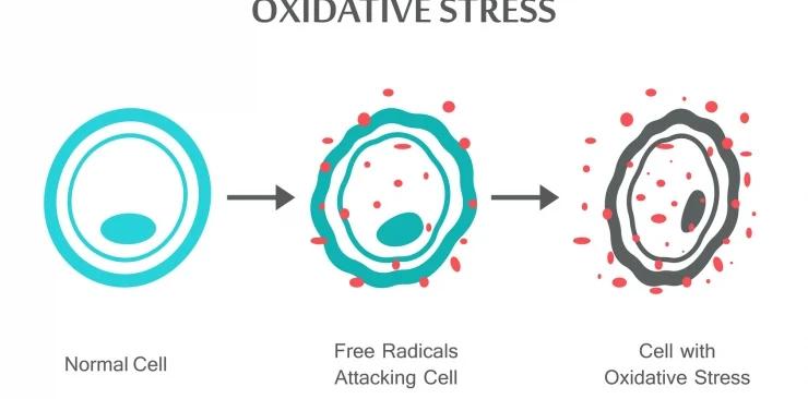 Co to jest stres oksydacyjny? Czy może być przyczyną problemów ze zdrowiem?