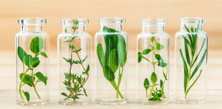 Najlepsze zioła, które możemy wykorzystać do poprawienia naszej urody