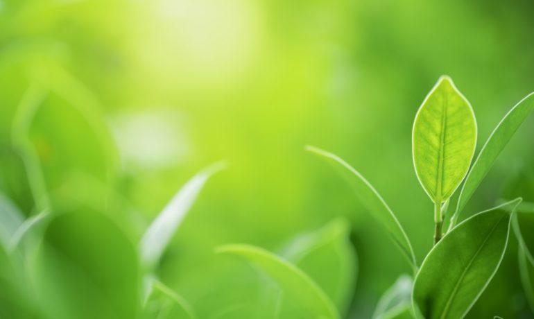 Biodostępność – weź ja pod uwagę komponując posiłek