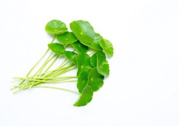 Ekstrakt z liści wąkroty azjatyckiej [8% triterpenów] – Centellin®