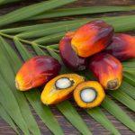 EVNolMax™ – mieszanina tokotrienoli i tokoferoli z olejowca gwinejskiego